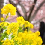 花粉の季節の到来。Happyに乗り切る☆
